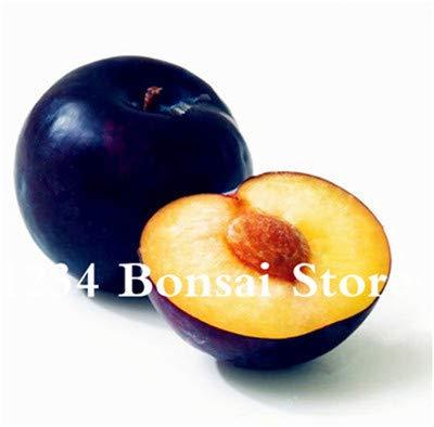Bloom Green Co. Haute qualité 20 pcs Rare Noir Brin prune Bonsai fruit délicieux douce bio arbre & quot; krim noir & quot; Légumes et fruits pot plante: 6