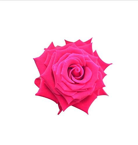 Toilettenaufkleber (1 Beutel / 2 Sätze) Real Shot Flower Rose Wohnzimmer Wanddekor Bad WC WC Aufkleber 20,2X19,8CM (Real Shot Glas)