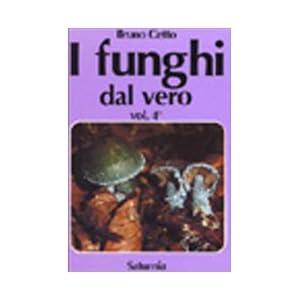 I funghi dal vero: 4