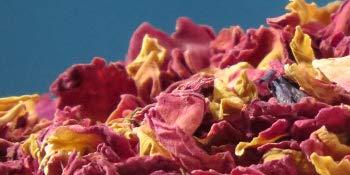 Rosenblten-Bltter-ganz-Sorten-rein-500ml-mit-herrlicher-Farbe-und-Duft-100-Premium-Qualitt-Schonend-HANDVERPACKT-In-Deutschland-Ein-Marken-Produkt-aus-der-Valdemar-Manufaktur