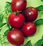 Premier Seeds Direct Tomato Black Prince includes 100 Seeds
