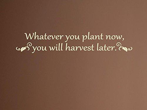 vinylsay 1248. whatever-g. tan-66X 12Wand decal-whatever Sie Pflanze jetzt, werden Sie später Ernte, 66x 12Zoll, glänzend Tan (Ernte Tan)