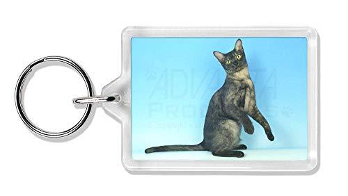 Advanta - Keyrings Pretty Asian Smoke Katze Foto Schlüsselbund TierstrumpffüllerGeschenk
