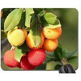 natures-bounty-mouse-pad-mousepad
