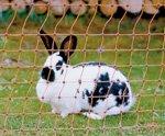 *Kaninchen-Elektrozaun 50 m x 65 cm Kaninchennetz Hasenzaun Kaninchenzaun Gartenzaun*