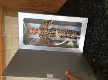 Preisvergleich Produktbild Barbie Collector Dolls # 13186 Christian Dior