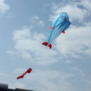Outdoor-Entertainment Kites 3D Riesige Parafoil Riesen Dolphin Blaue Drachen.