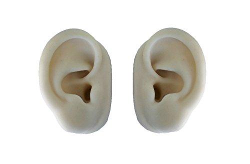 Modello orecchio (coppia) per esercizi di agopuntura - Leonidov