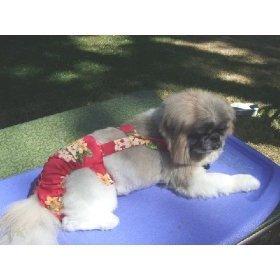 Joybies Tropische Shorts für männlichen Hund XX groß Rot