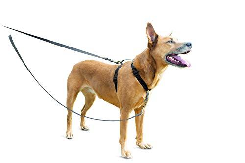 PetSafe Anti-Zieh Hundeleine, kein Ziehen, Reflektoren, 1,2 m, für Hunde Aller Größen -
