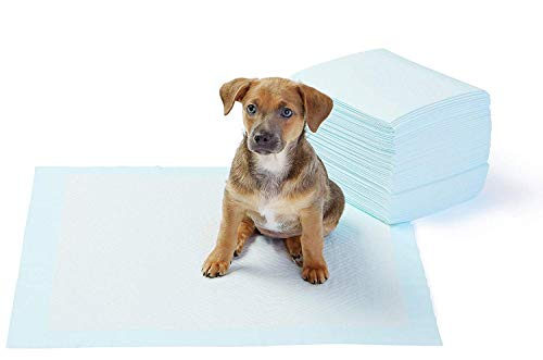 AmazonBasics Puppy Pads Trainingsunterlagen für Welpen, Standardgröße, 50 Stück