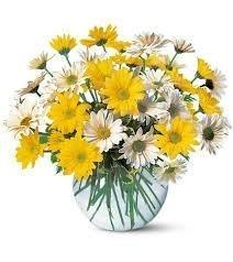 ramo-de-margaritas-blancas-y-amarillas-naturales-frescas-flores-a-domicilio-envio-urgente-24h-tarjet