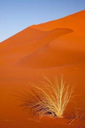 Feelingathome-STAMPA-ARTISTICA_x_cornice-Erba-e-rossastra-Duna,-Sossusvlei,-Namibia-cm77x50-arredo-POSTER-fineart