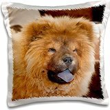 dogs-a-chow-chow-puppy-dog-with-tan-background-16x16-inch-pillow-case