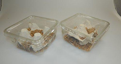 Mehlwürmer lebend 100g aus deutscher Zucht