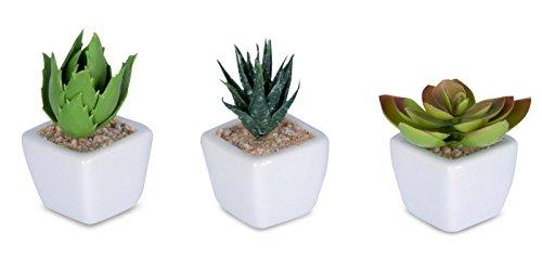6er Set Sukkulenten B x H 4,5x9cm Kunstpflanze Grün Weiß Kunstblume Deko - 3