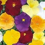 Fiore - Kings Seeds - Confezione Multicolore - Viola del Pensiero -Crystal Clear Mix