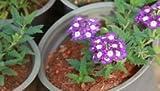 Pinkdose® Blumensamen: Hastata Exotic Seeds Vögel, die Blumensamen anlocken (14 Pakete) Gartenpflanzensamen von