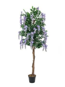Goldregenbaum, violett, 240cm