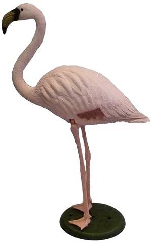 Apollo Flamingo