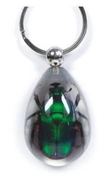 Echter Smaragd Rose Chafer Schlüsselanhänger klare Insekt