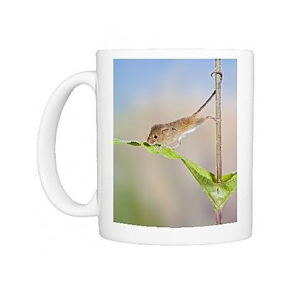 photo-mug-of-harvest-mice-on-teasel-using-tail-to-cimb