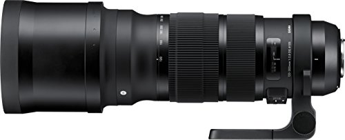 Sigma 120-300 mm f/2.8 DG OS HSM Sports Objektiv für Nikon Objektivbajonett