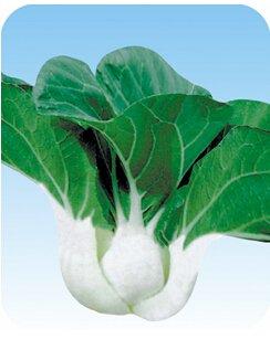 1 original Pack 2000 + pcs graines semences pakchoi graines de chou chinois Bonsai plantes Semences pour la maison et le jardin