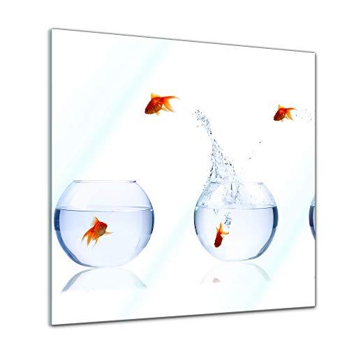Glasbild - Fischolympiade - 30 x 30 cm - Deko Glas - Wandbild aus Glas - Bild auf Glas - Moderne Glasbilder - Glasfoto - Echtglas - kein Acryl - Handmade