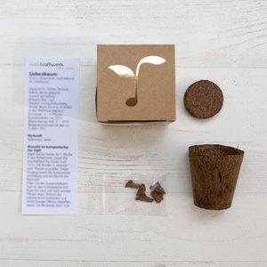 """Geschenk-Anzuchtset """"Dein Christbaum 2024"""" von Naturkraftwerk e. U. auf Du und dein Garten"""