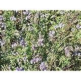 Premier Seeds Direct PHA01 25g Green Manure Phacelia Tanacetifolia Seeds