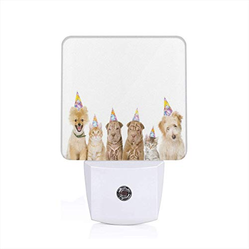 Shelter Dogs Terrier Cats With Cone Hats Party Theme Birthday Image Print Plug-in LED Night Light Lamp with Dusk to Dawn Sensor, Night Home Decor Bed Lamp - Shelter-garage