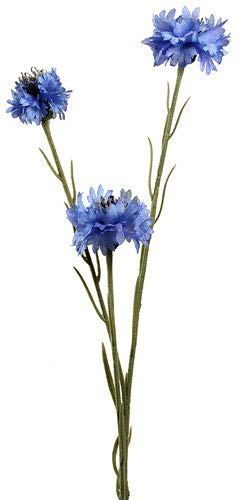 Kornblume/Sehr Bienenfreundlich/ca.50 Samen/kaum Pflegeaufwand/lange haltbarer Vasenschmuck