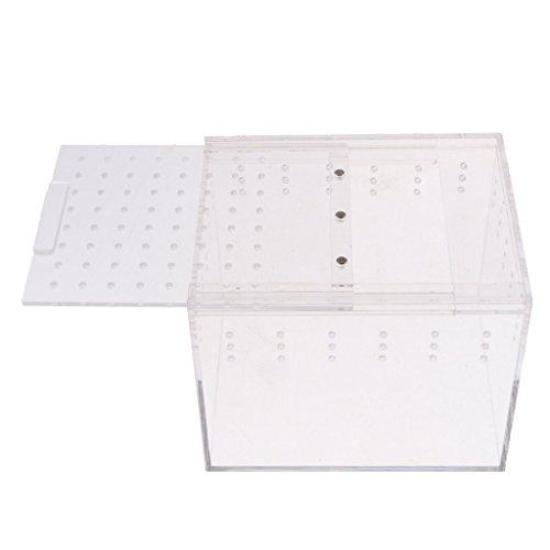 Homyl Acryl Reptilien Brutbox Fütterungsbox Transportbox - Typ 2-15x12x12cm