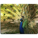 Peacock Tail Fan - MSD Natural Rubber Gaming Mousepad IMAGE