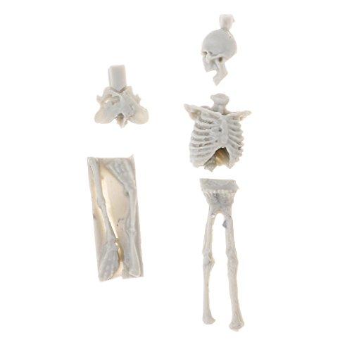 FLAMEER Figurilla Esquelética De Cráneo Miniatura 1/35 para Juguete De Construcción De Paisaje De Mesa De Arena