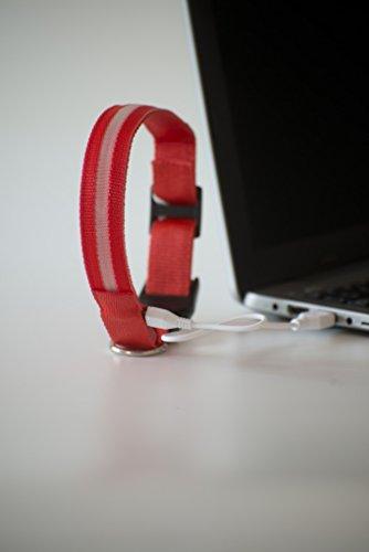 NEU Hundehalsband, -LR- LED mit neuem Lithium-AKKU, über 500x wieder aufladbar!!! , Das Leuchthalsband für ganz lange Zeit, nie mehr Batterien kaufen von PEDHOUSE (L, ROT) L: Halsumfang: 45-52cm - 3