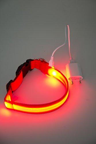 NEU Hundehalsband, -LR- LED mit neuem Lithium-AKKU, über 500x wieder aufladbar!!! , Das Leuchthalsband für ganz lange Zeit, nie mehr Batterien kaufen von PEDHOUSE (L, ROT) L: Halsumfang: 45-52cm - 2