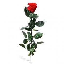 Rose stabilisee 25cm - FlowerBox