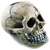 Classic Fish Tank Ornament Spooky Skull 4
