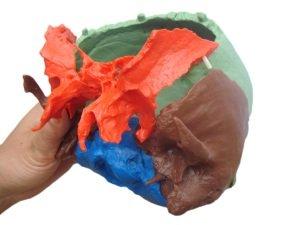 Zoom IMG-3 cranstein 216 cranio scomponibile versione