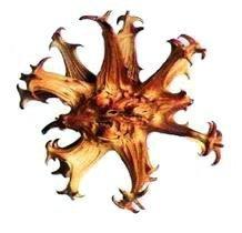 Harpagophytum pure pour chevaux 1kg