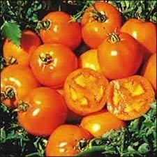GEOPONICS 200 graines biologiques, Heirloom Seeds Sunray tomates nouvelles graines pour 2017