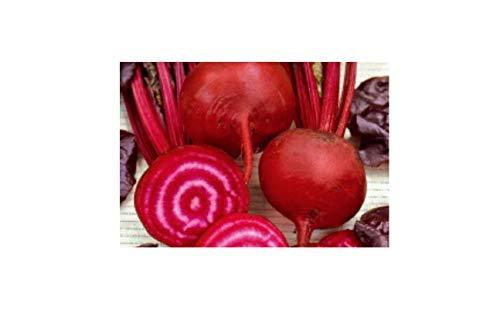 30x Rote Rübe Bull's Blood – Rübensamen Samen Gemüse Garten Pflanze KS18