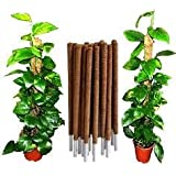 Intagro farms Coir Moss Stick/Coco Pole for Climbing Indoor/Money Plants, 3ft, 96cm (Brown-single piece)