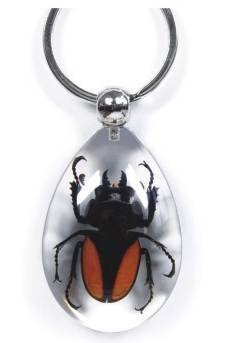 real-chinese-stag-beetle-key-ring-clear-insect-specimen-charm