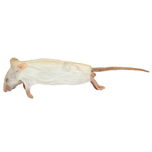 Frozen-Mice-Medium-Size-15-22g-Pack-of-50