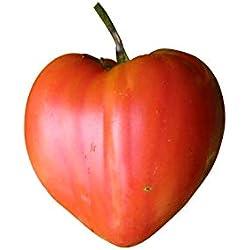 Ochsenherz-Tomate 10 Samen (RAR) (Gigantisch große Tomate)