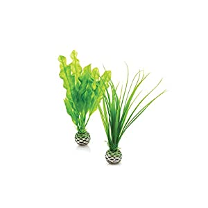 biOrb Easy Plant, Small, Pack of 2, Green