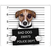 '' Chico, GANGSTER: hochwertige Hund Mouse Pad/Mauspad mit Bild von Chico, die berühmte Jack Russell Terrier